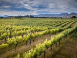 Spotlight on: Marlborough wines